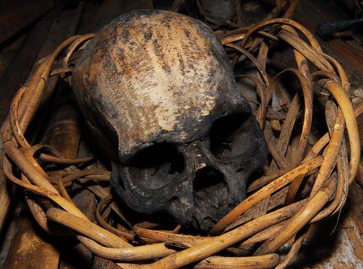 предположительно череп примата